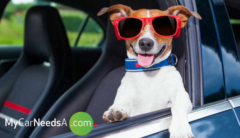 Taking The Dog on A Trip? Let Us Fetch You Some of The Best Accessories for Your Car