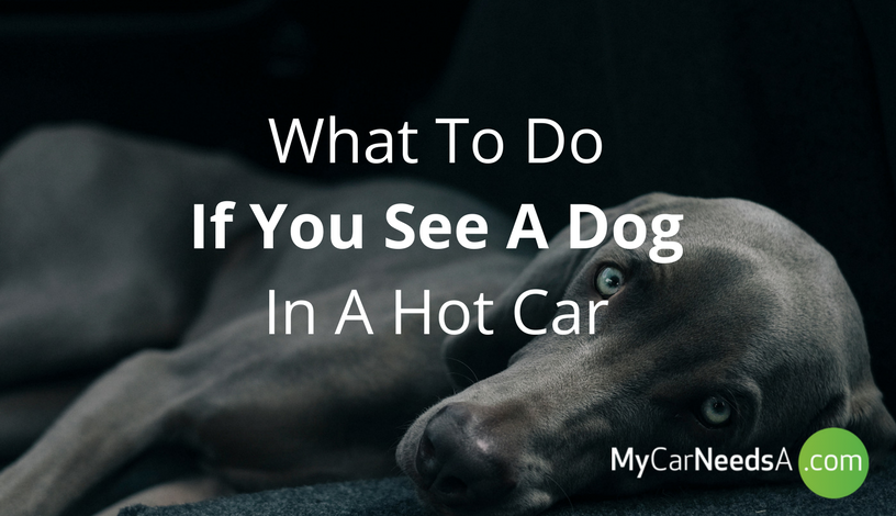 What To Do When You See A Dog In A Hot Car?